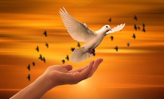 Peace Has Come Upon Us   12/6/2020 Sermon By Pastor Julio Jr.